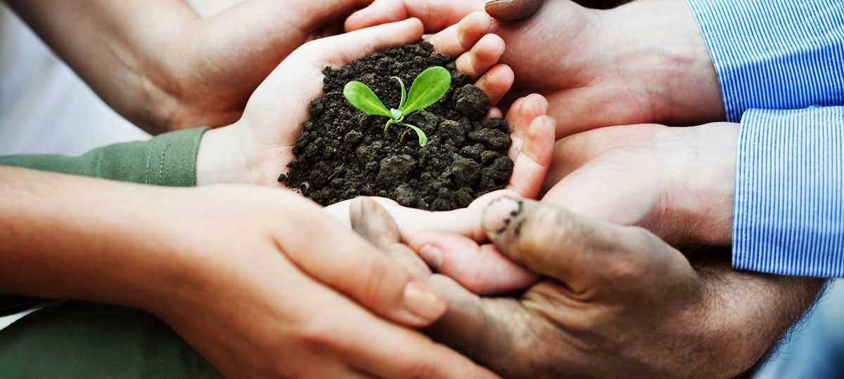 Solidaridad - Sustainability (Tea Procurement)