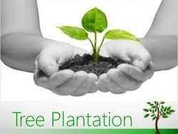 Tree Plantation & Water Conservation- CSR Projects India