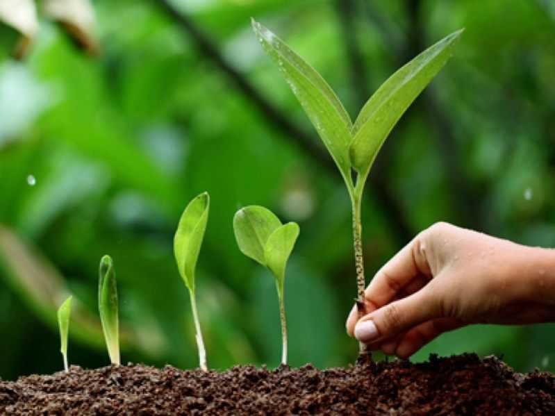 Tree Plantation and Environment Protection