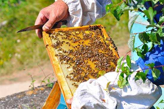Bee Keeping Activity