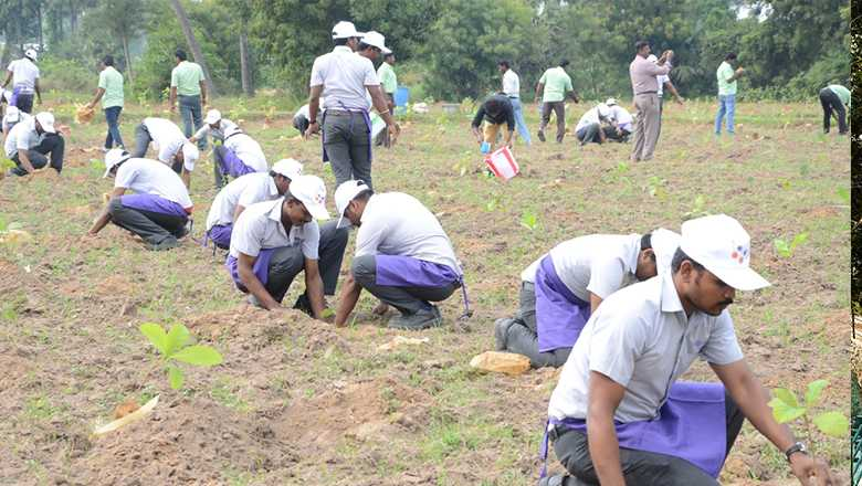 Tree Plantation and Livelihood Project- CSR Projects India