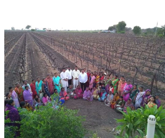Entrepreneurship Development among Tribal Grape Farm Workers in Nasik District