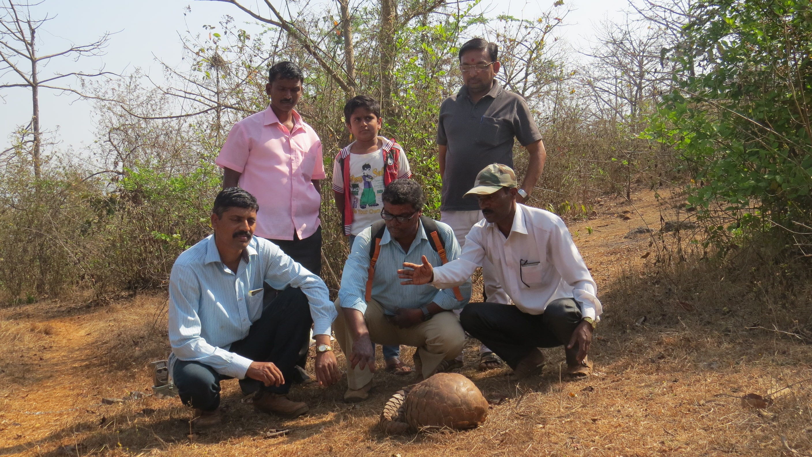 Conservation of Indian Pangolin in Konkan region Maharashtra India.
