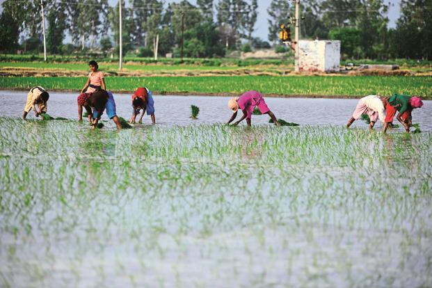 Government invites start-ups for agri-tech solutions
