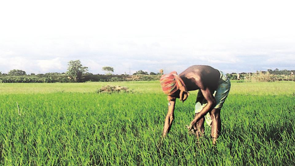 Can startups solve agriculture sector issues? Govt seeks proposals in key areas