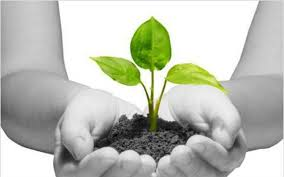 This World Earth Day, TO THE NEW pledges to plant over 100 trees in Noida